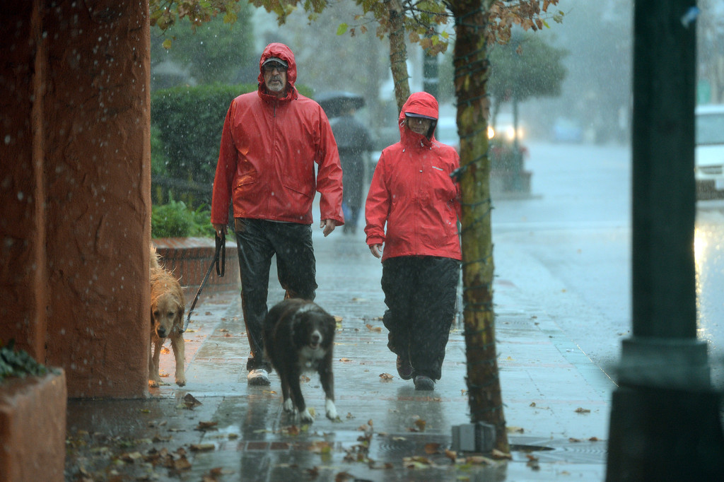 . Dogs get their morning walk despite the weather in Los Gatos, Calif., on Thursday, Dec. 11, 2014. The big storm made its way south, after pounding the North Bay in the early morning hours. (Dan Honda/Bay Area News Group)