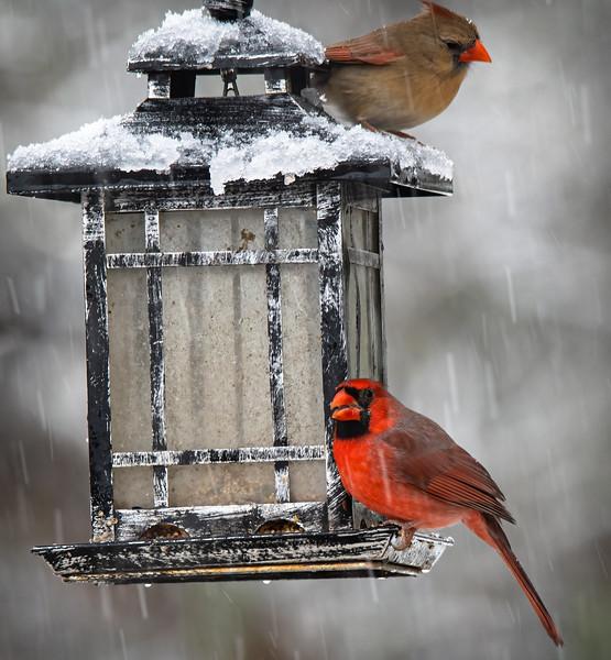 Winter Dining.jpg