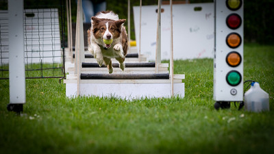 Flyball | Dog Photography