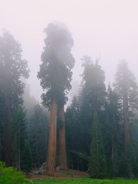 California Day 6 Sequoia 05-30-2017 118.JPG