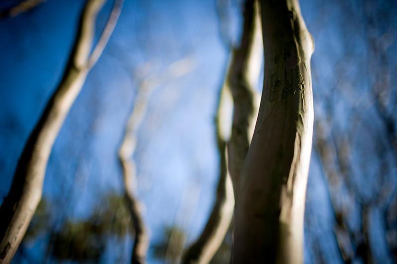Bare trees in winter, Seville, Spain