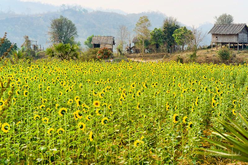 Mar162013_akyikatae_kan_chaung_mindat_5215.jpg