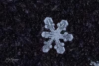 snowflakes-1764.jpg