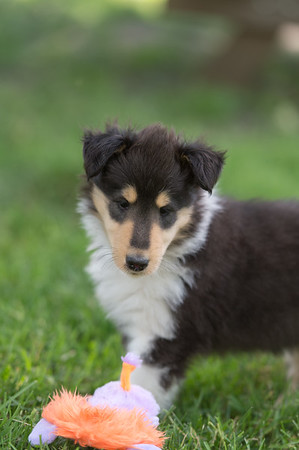 Puppies 6-29-18