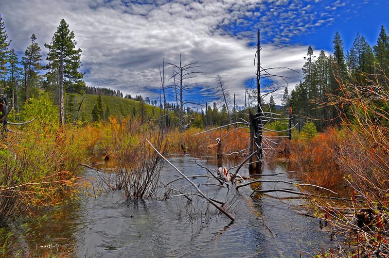 sand pond 12-30-2010.jpg