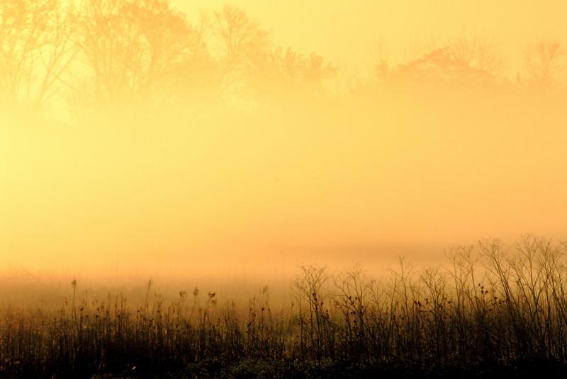 Foggy Morning in Bolingbrook.jpg