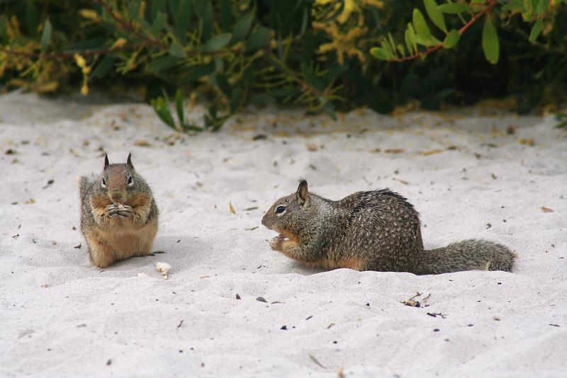 4624 Squirrels.jpg