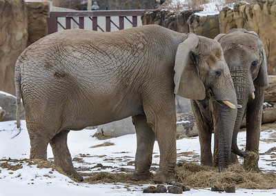 Cleveland Metroparks Zoo March 2014