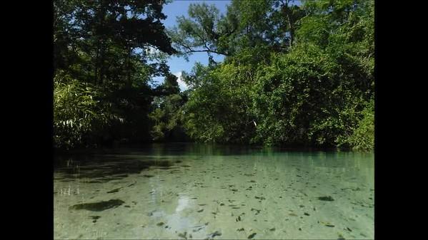 Weeki Wachee River - videos and slideshows