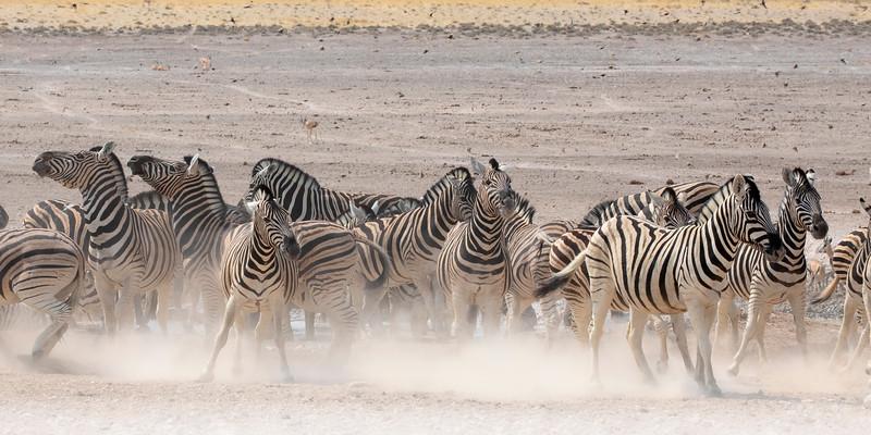 Namibia 69A9194.jpg