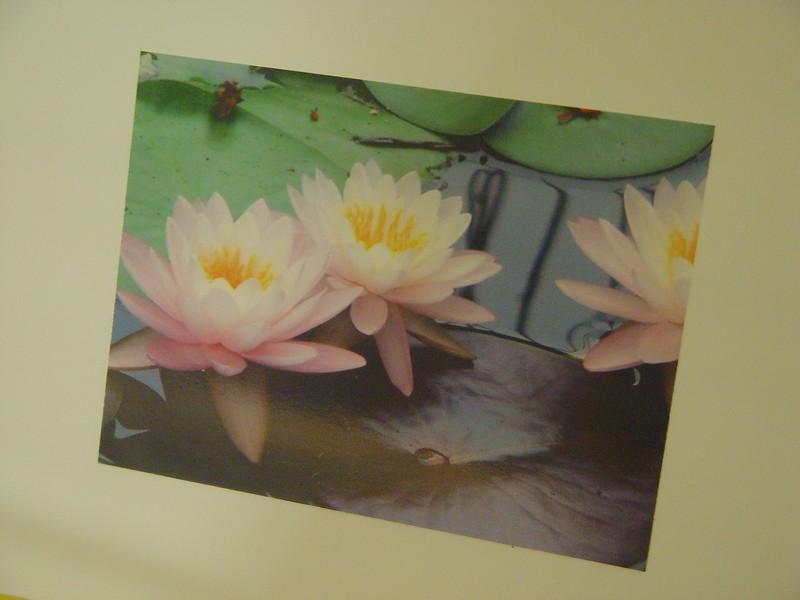 lilly pads.jpg