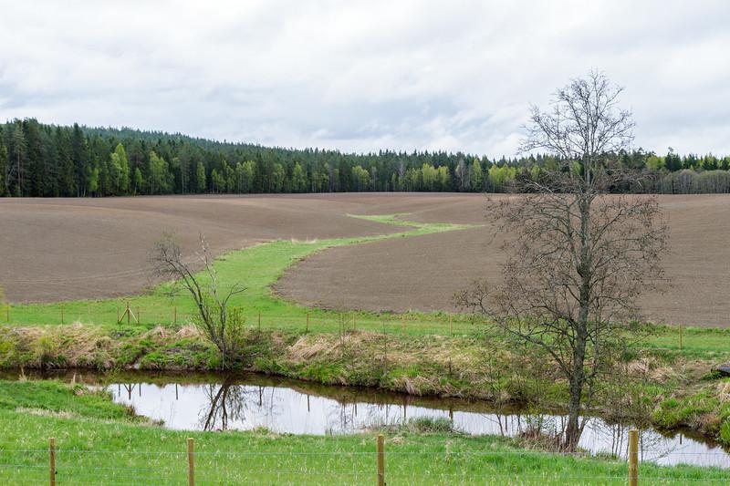 Grasdekt vannvei og buffersone mot bekk