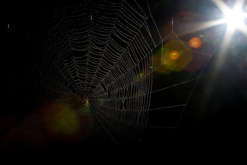 Spiderman-103.jpg
