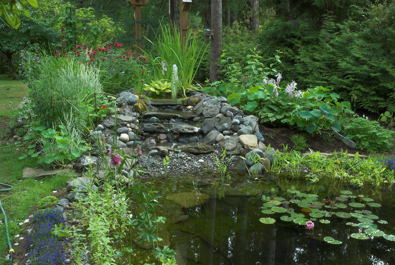 Garden pond and waterfall