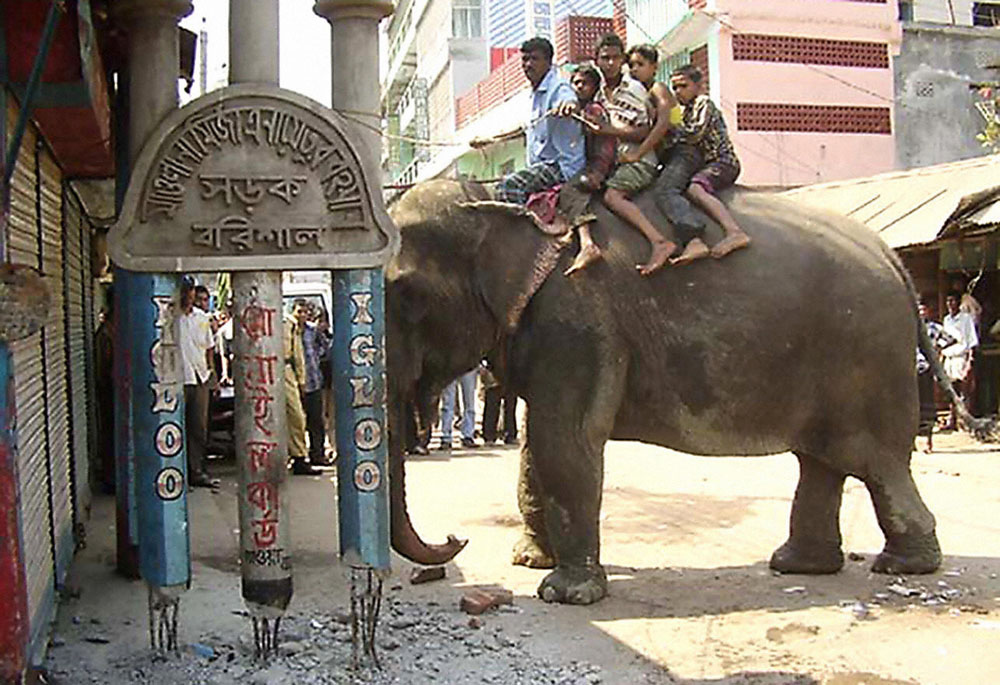 Description of . Bangladeshi labourers sit on a circus elephant as it demolishes an illegal construction in Barishal, 12 March 2007.   The circus elephant came to the aid of city chiefs in southern Bangladesh after they were ordered to demolish illegal buildings without heavy equipment. Discovering that there were no bulldozers available, officials decided to employ a pachyderm from a travelling circus to help do the work. AFP PHOTO/STR
