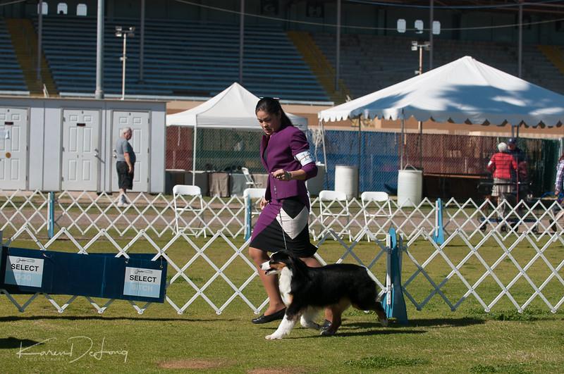 20170205_Australian Shepherds_Lost Dutchman Kennel Club-111.jpg