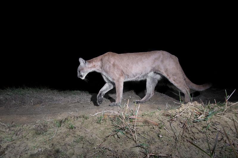Panther 7.jpg