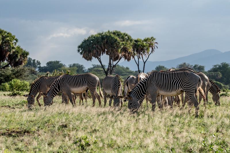 Samburu (7 of 70).jpg