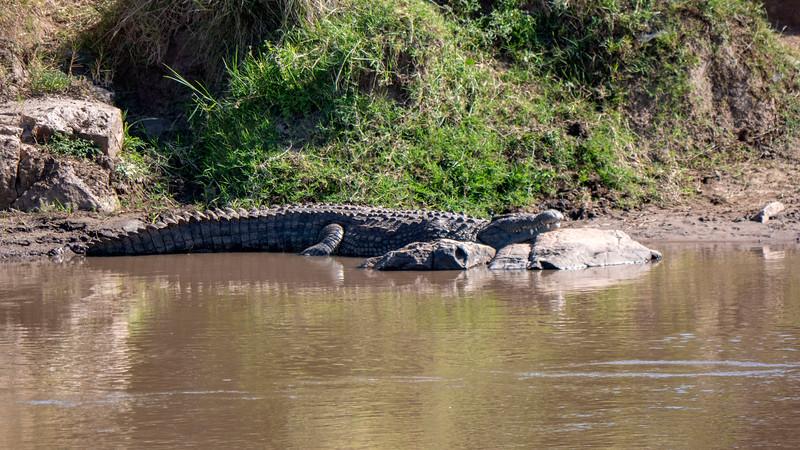 Tanzania-Serengeti-National-Park-Safari-Crocodile-02.jpg