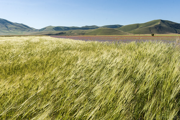 The windy  Castelluccio