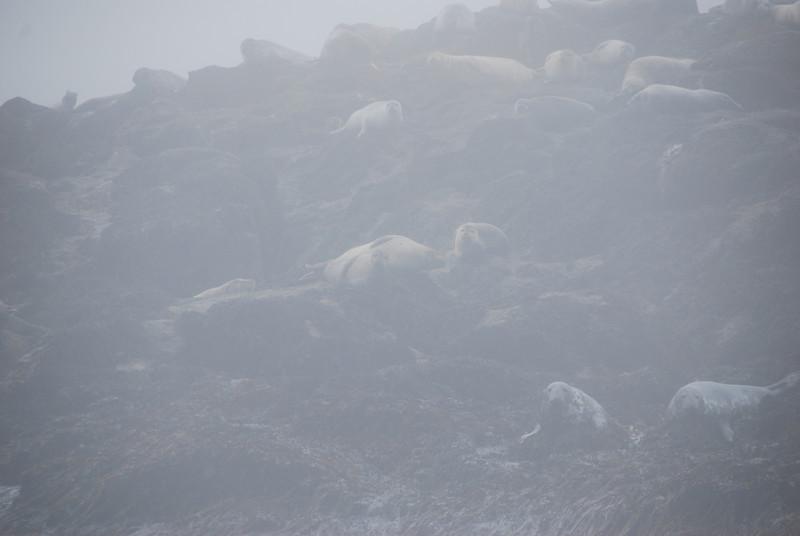 Machias Seal Island Trip - 131