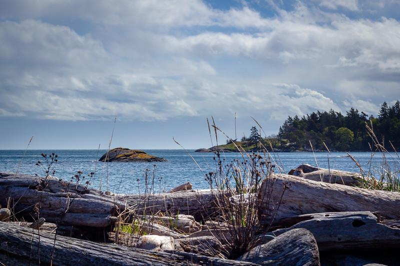 driftwood view.jpg