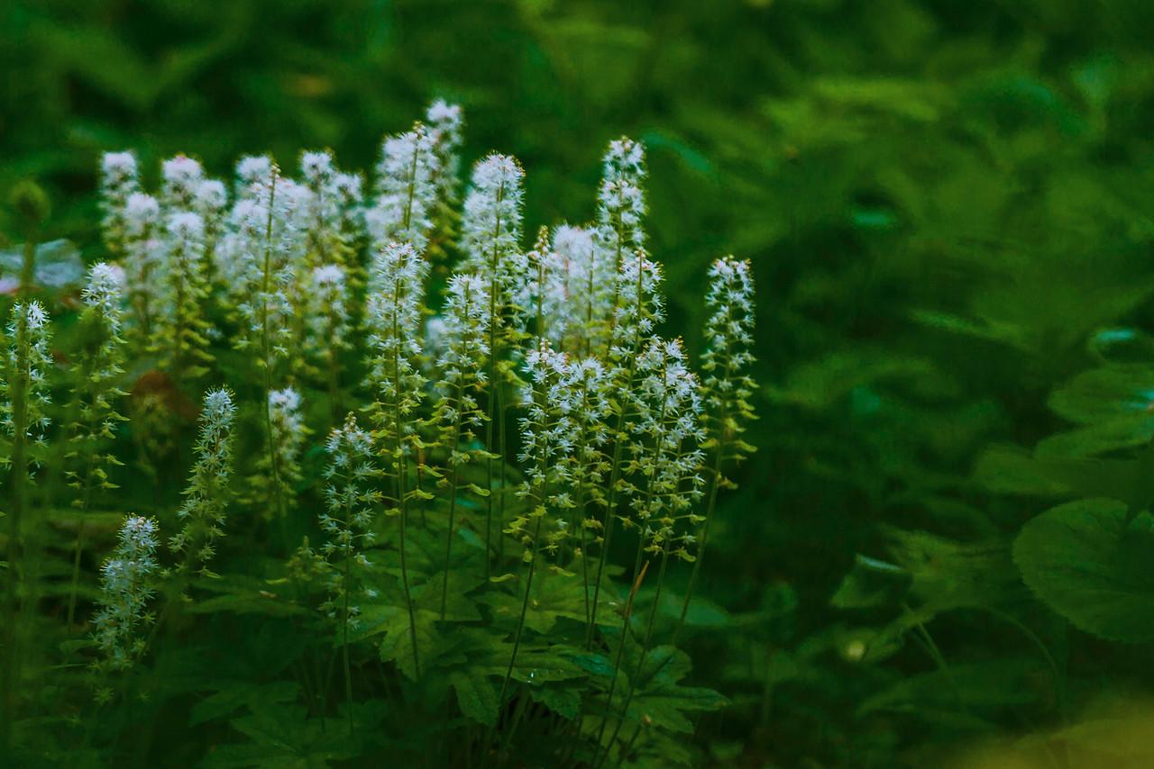 Chanticleer花园,花儿朵朵