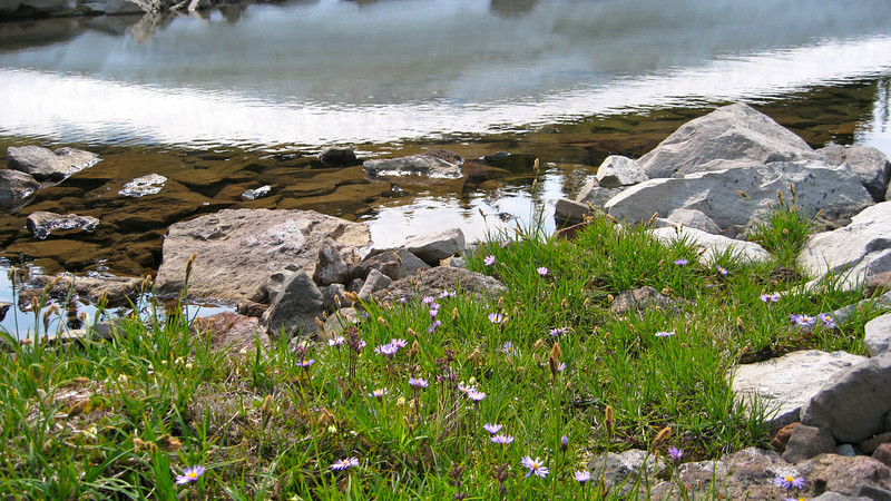 Asters and pretty snow reflection.