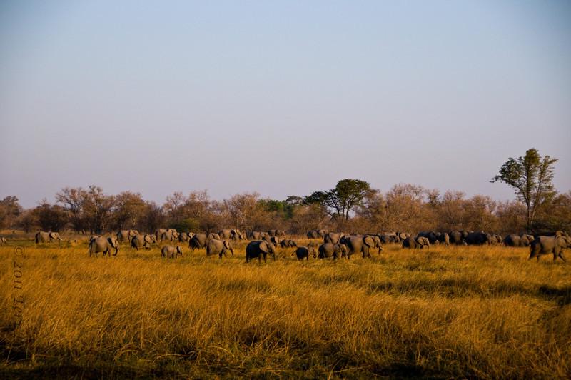 african scenery (23).jpg