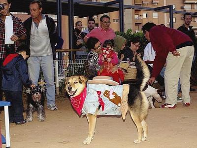 Maddie Halloween Spain