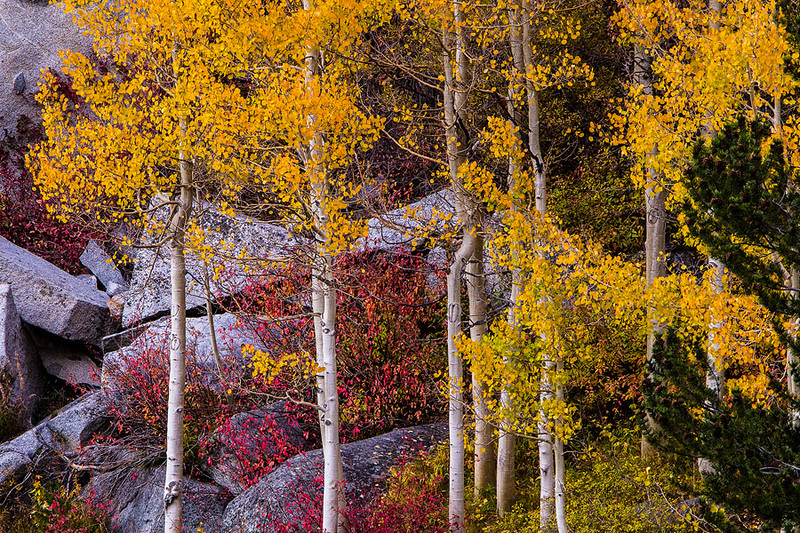 Eastern_Sierra_Fall_Gold_Red 2.jpg
