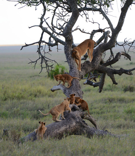 East Africa Safari 366.jpg