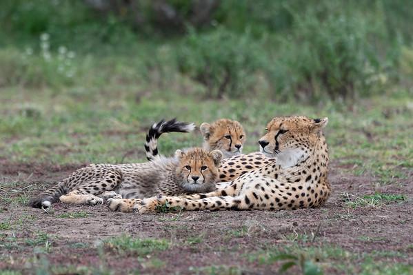 Tanzania: Tarangire, Lake Eyasi and Serengeti