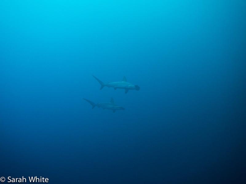 Project Shark 2013-130.jpg