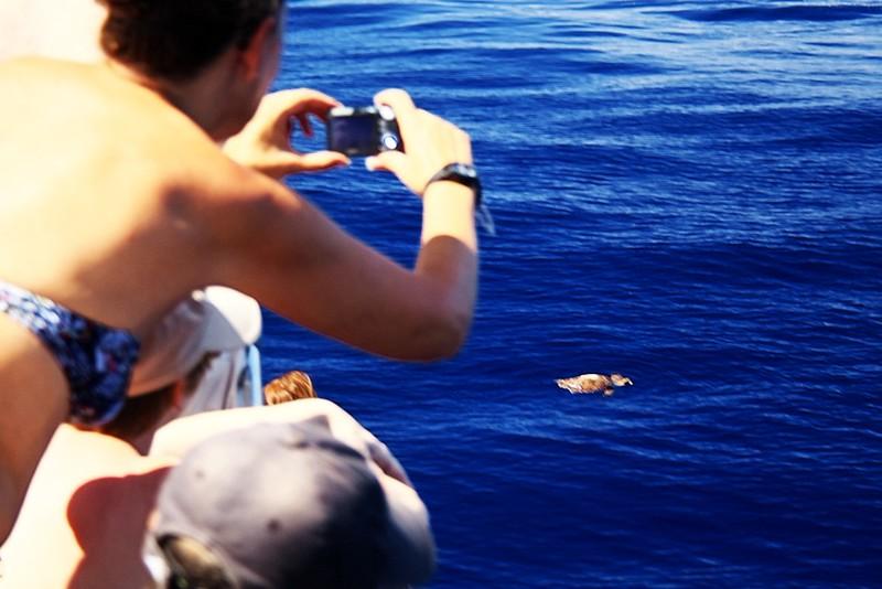 Rozmazaná mořská želva, která se s námi chtěla kamarádit mnohem míň než delfíni a kulohlavci a velice rychle zmizela kamsi do hlubin