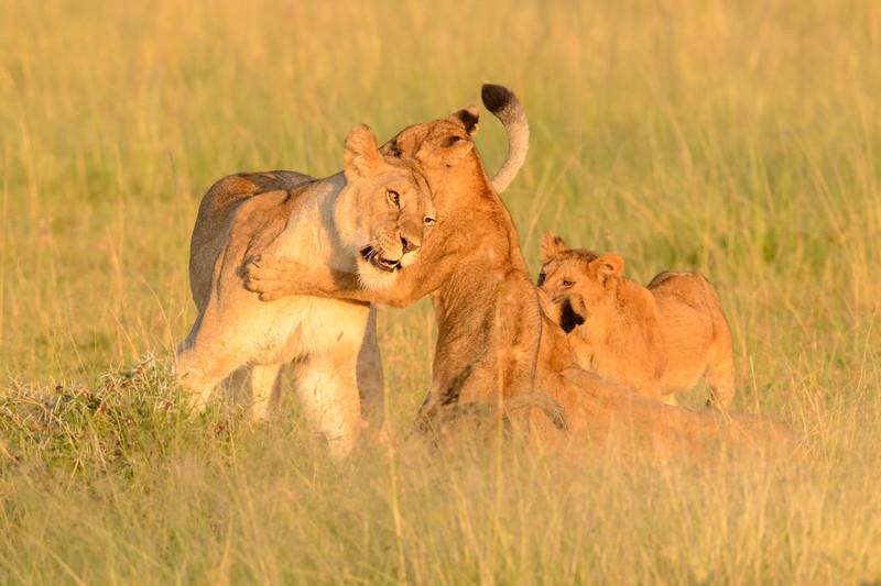 20160215__KET7487_Serengeti_Day_7.jpg