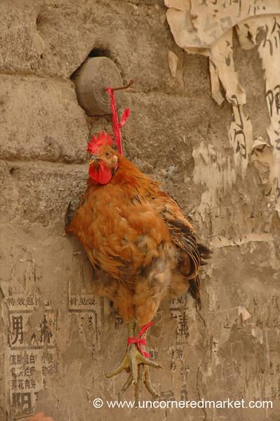 Hanging Chicken - Guizhou Province, China