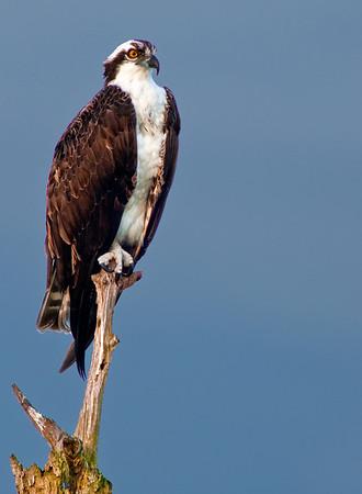 Viera Wetlands - Sept 15, 2009