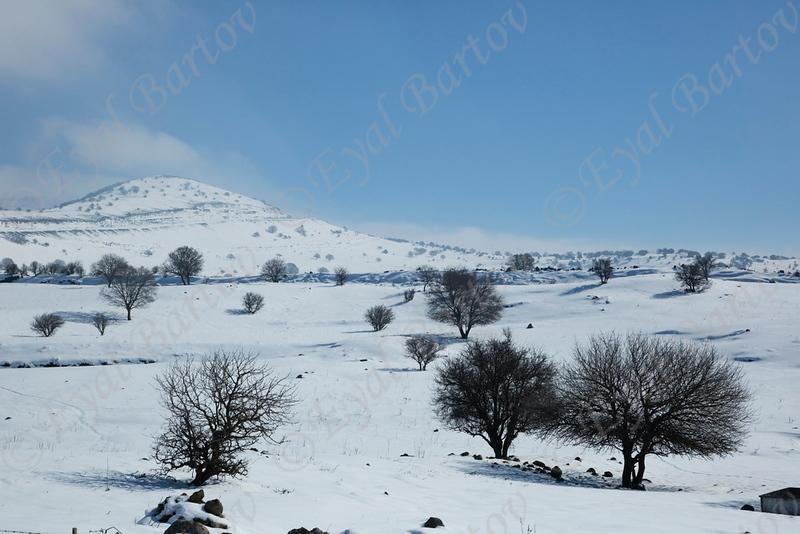 Golan 07.jpg