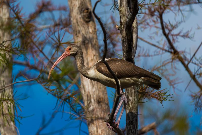 Everglades (13 of 60).jpg