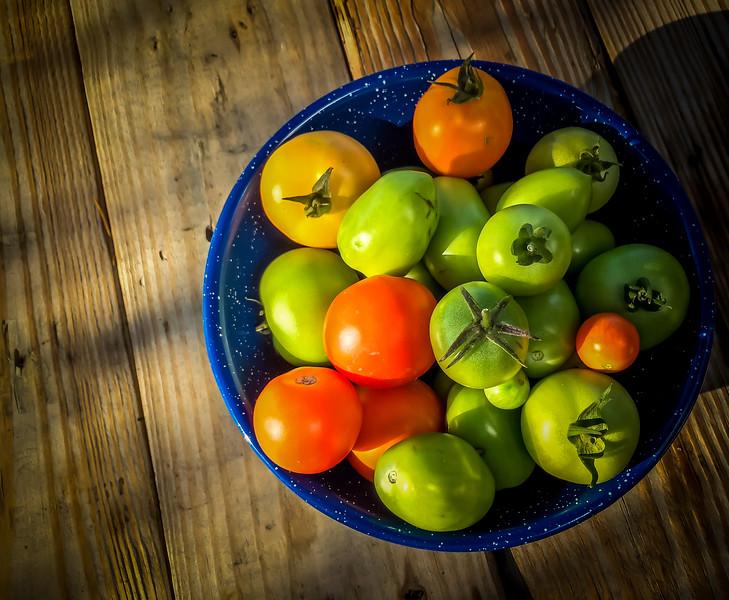 tomatoes-6940