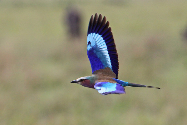 Kenya-birds-2010