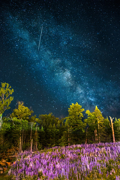 Lupine and the Milky Way at Saddleback Mountain