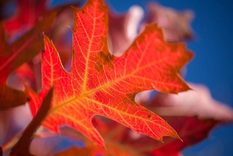 20151024-Fall Colors-89.jpg