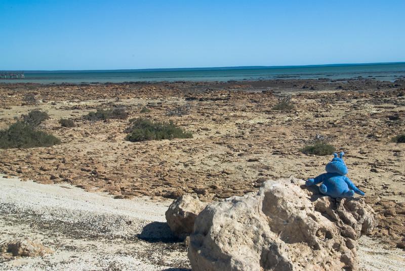 Skull at Stromatolite Pools - Western Australia