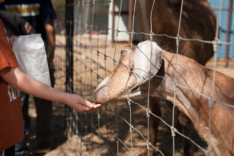 Austin_Zoo-5370.jpg