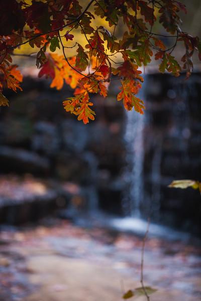 FallFoliage-26.jpg