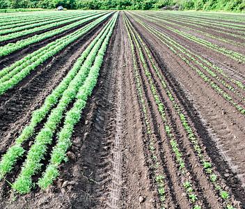 Gaia Farms