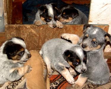 Nemo & Grawley's Pups