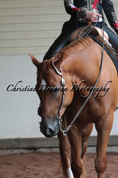 SSS Open 2-6YR Old Western Pleasure Stake